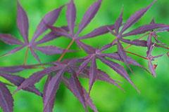 秋季观叶植物的栽培及养护