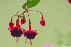 怎么养护夏季休眠花卉