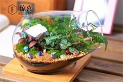 微景观生态瓶的盆栽在市场上悄然流行
