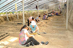 山西代县四位大学生村官承包15座大棚栽培花卉自主创业