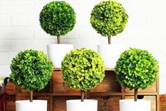 夏季家庭盆花养护要注意的要点
