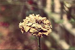 花卉死亡的主要原因及救治方法