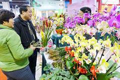 怎么选购买花 买花的学问