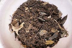什么是腐叶土 腐叶土的制作方法