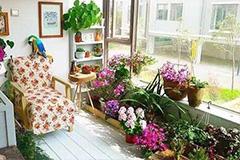 夏季阳台养花要加强空气湿度