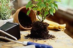 养盆栽花卉常用哪些土壤?常见花卉对酸碱性的要求?