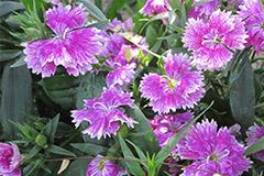 哪些花卉适宜老年人种植