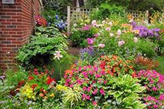九月份庭院地栽花卉的管理