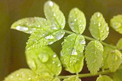 如何养护叶子植物 观叶植物的养护要点措施