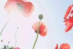 花与《红楼梦》