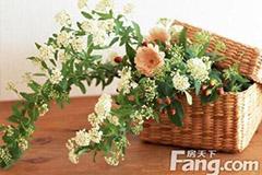 九种适合家居摆放的花卉