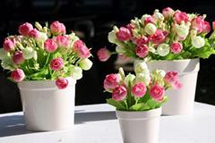 春节黄金周专家教您如何选购鲜花
