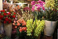 杭州花市:花源品种样式好于往年 生意却异常冷清