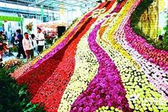 鲜花成时尚年货 哈埠鲜花市场比往年更火