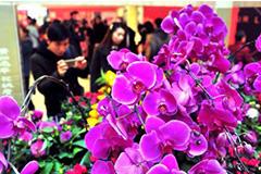 南昌花市火爆迎春节 玫瑰康乃馨价格翻三番