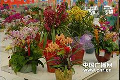 温州:年宵花市刮起降价风
