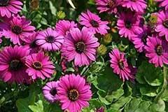 夏天要来了,这些植物养在家里,蚊虫不见了!你还不赶紧养一盆?
