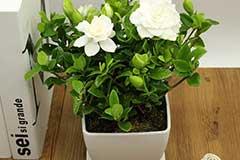 适合办公室的8盆植物推荐 买过的人都说好