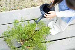 养花出状态如何浇水是个关键 教你小妙招判断植物花卉什么时候需要浇水