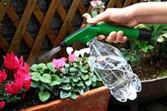 养花有小飞虫怎么办?6种方法让它远离你家!