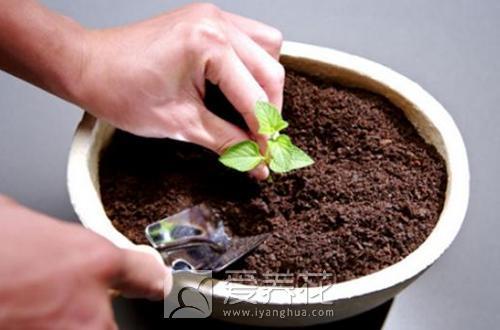 花盆土有长虫子怎么办图片