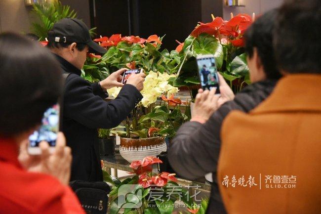 花卉展销会图片