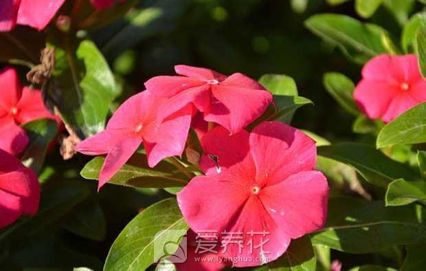 红色花卉图片