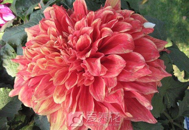 南方花卉北方养图片