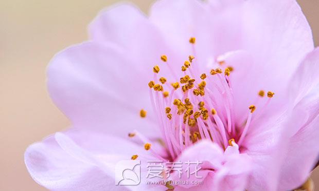 观花植物图片