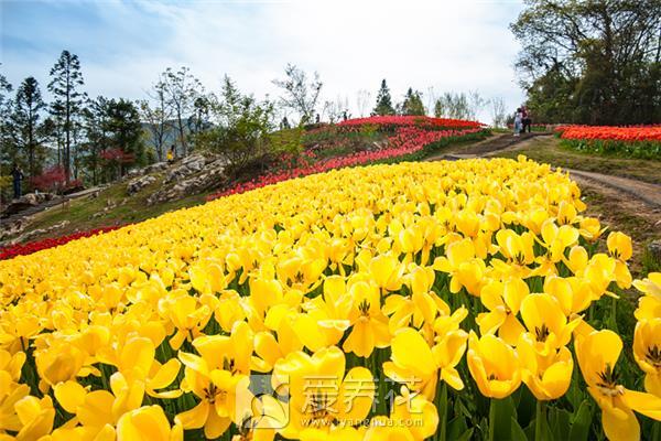 春季种植花卉图片