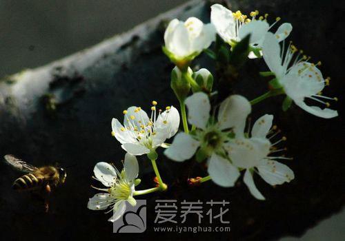 梅花图片图片
