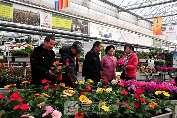 花卉产销形势分析图片