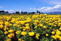 适合春天养的花有哪些