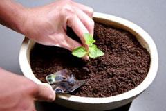 花盆土里有长虫子怎么办,几个简单小方法就可以消灭掉