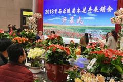 山东乐陵市首届苗木花卉展销会召开 200余种苗木花卉齐亮相