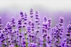 这5种植物特别有助于睡眠,放在卧室里帮助你提高睡眠质量