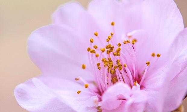 [从零开始学养花]怎么进行观花植物的日常养护?