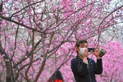 京城迎最佳赏花期 赏花高峰将持续到五月中旬