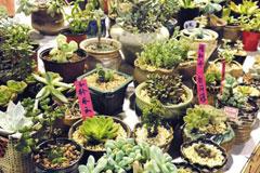 如何识别盆栽花卉的优劣 如何在花卉市场选购到优良花卉