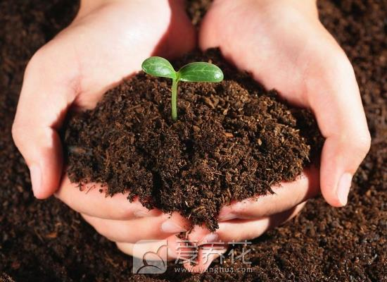 养花土壤图片
