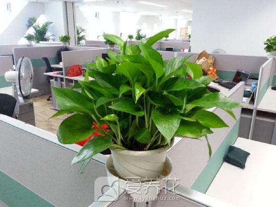 新房摆放什么植物图片