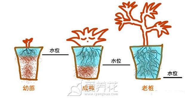 多肉植物如何浇水图片