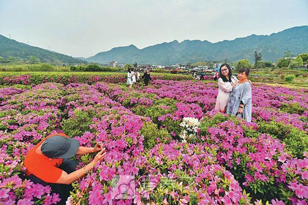 花卉文化旅游节图片