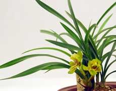 兰花的种植手册