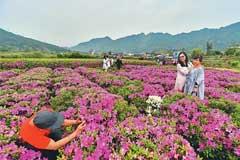 福建罗源举办首届花卉文化旅游节