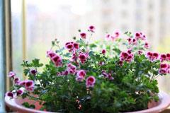 [从零开始学养花]如何养花?总结最全面的养花八个误区