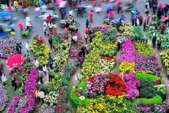 [从零开始学养花]养花从挑选买花开始,买花的7个要点原则总结