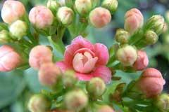 让特殊的日子充满花香,细说调节花期的4种方法