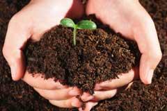 [从零开始学养花]养花土壤的选择:不同的花要配不同属性的土壤