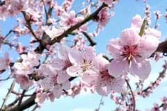 春季养花注意事项和花卉的春季管理